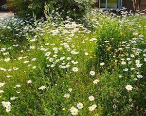 How to Start a Native Wildflower Meadow [6 Easy Steps]