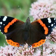 For the Love of Butterflies – A Poet Goes Wild Nearby