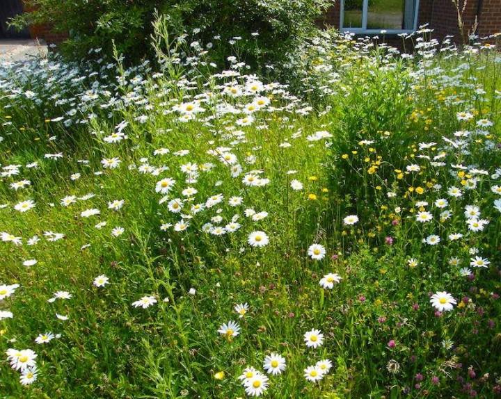 Jo's mini meadow