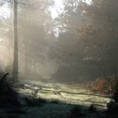 misty winter woodland